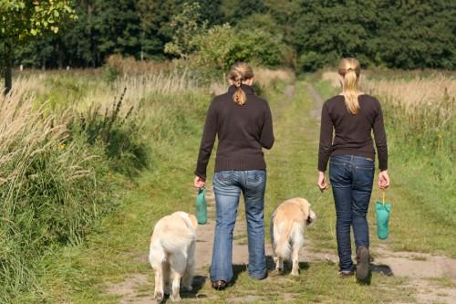 Golden Retriever - Mensch und Hund